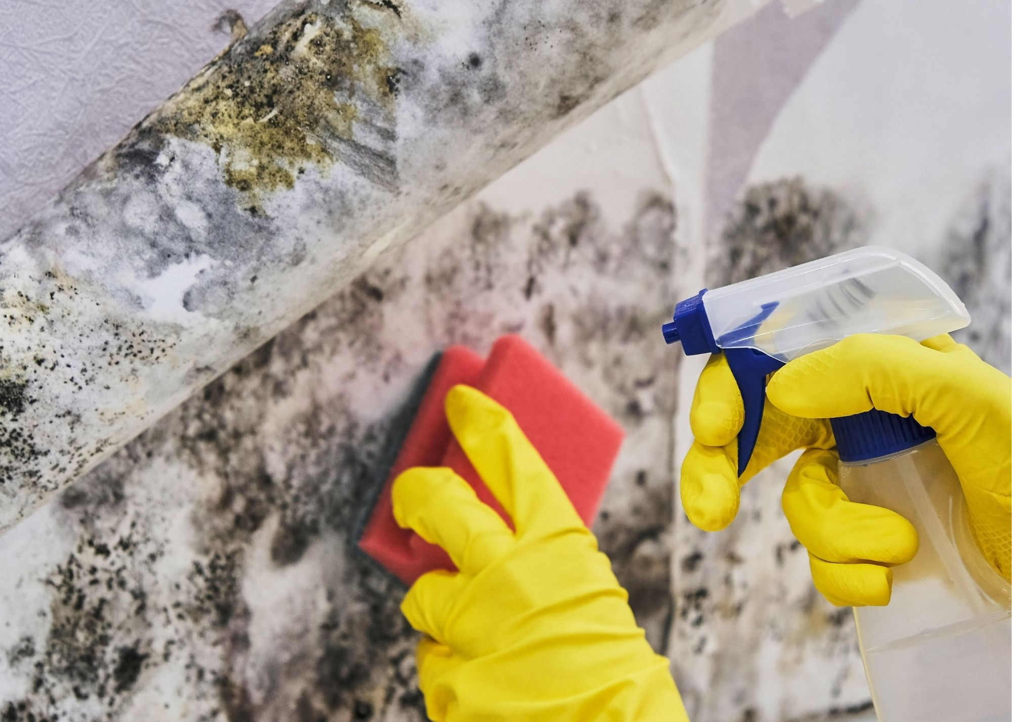 mold remediation Raleigh NC