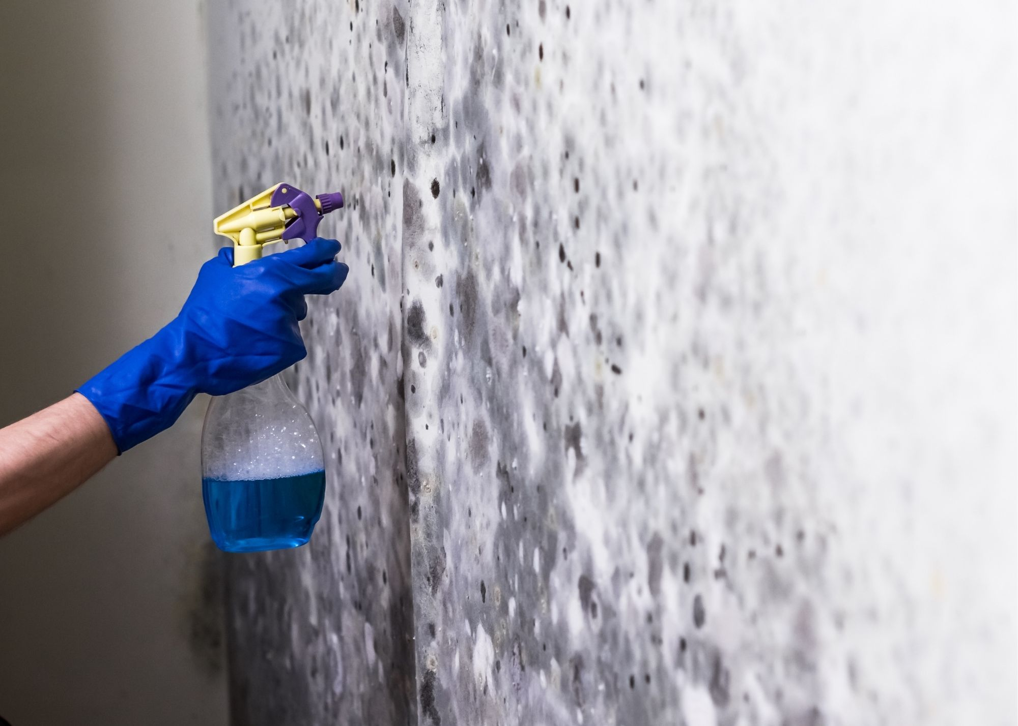 mold removal in Raleigh NC
