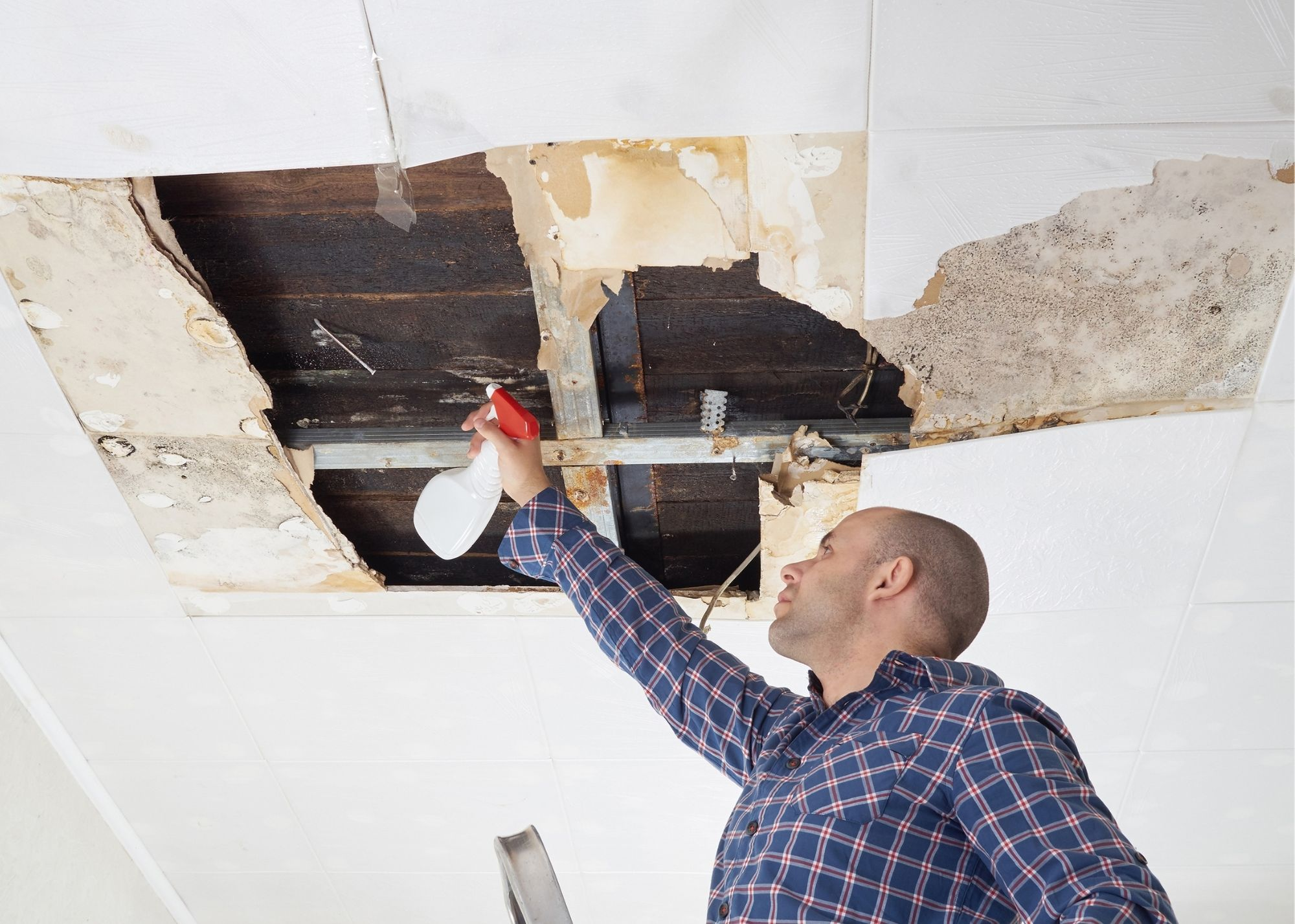 mold removal Raleigh