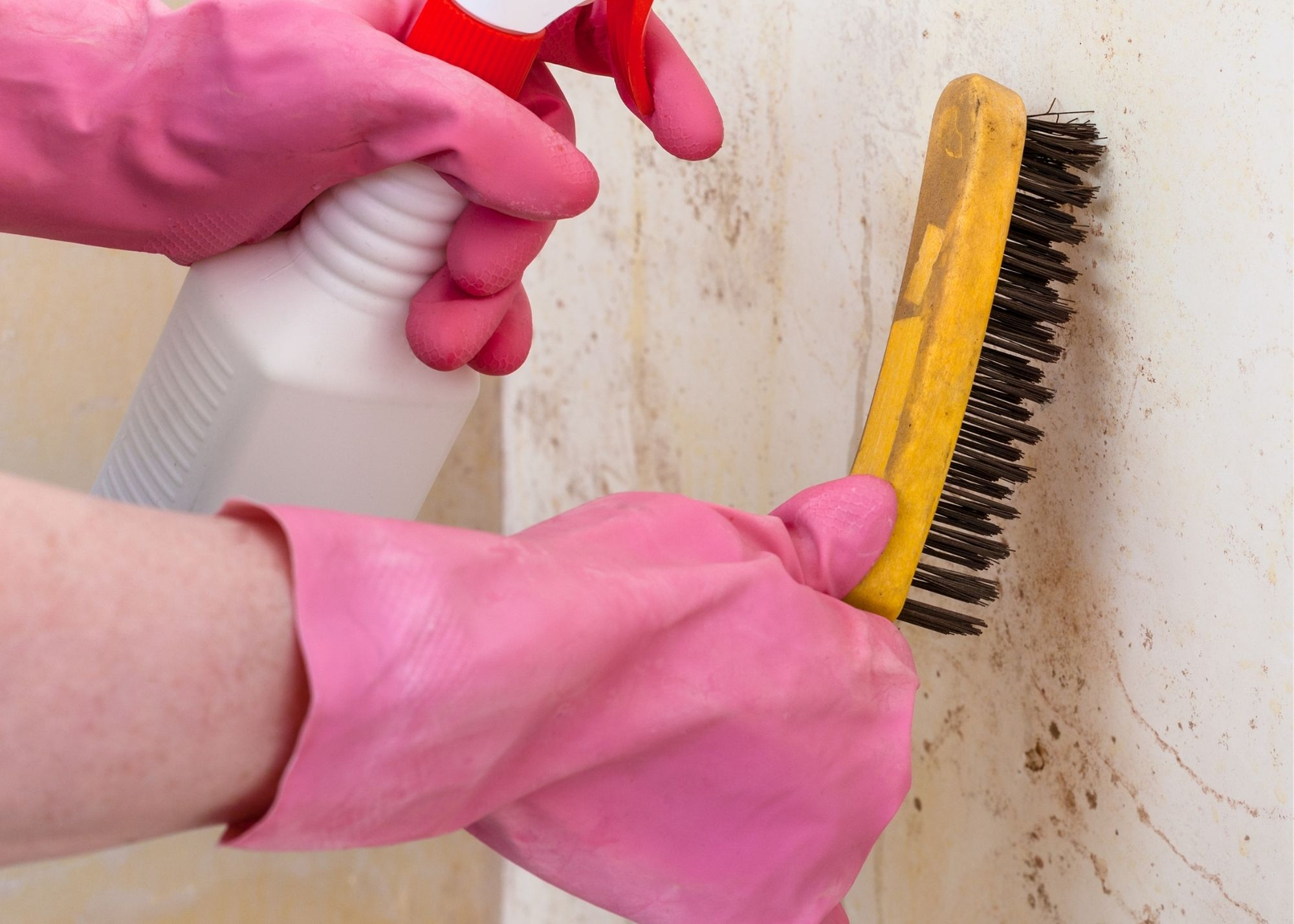 mold inspection Raleigh NC